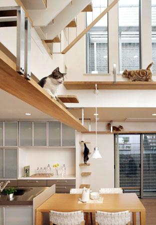 La maison con ue sp cialement pour les amoureux de f lins Home run architecture