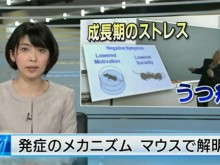 NHK anti-depression news