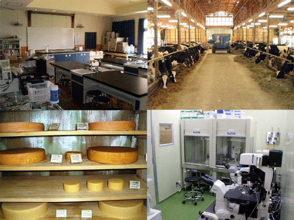 Obihiro Agricultural High School Dairy Science Course